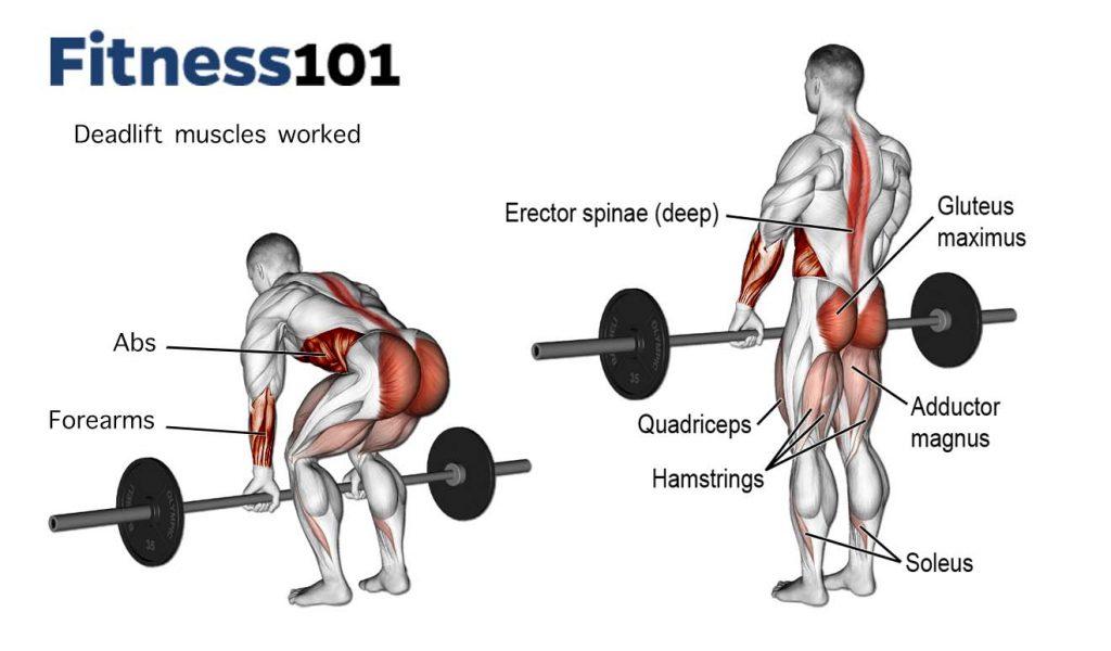deadlift spieren gebruikt